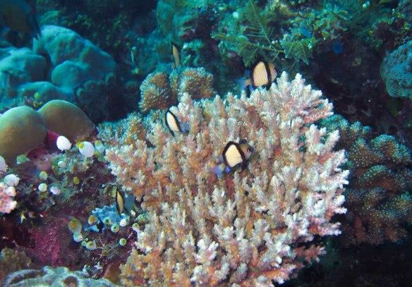 leetlereeffish