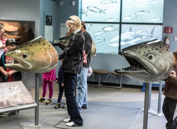 informative fish head display