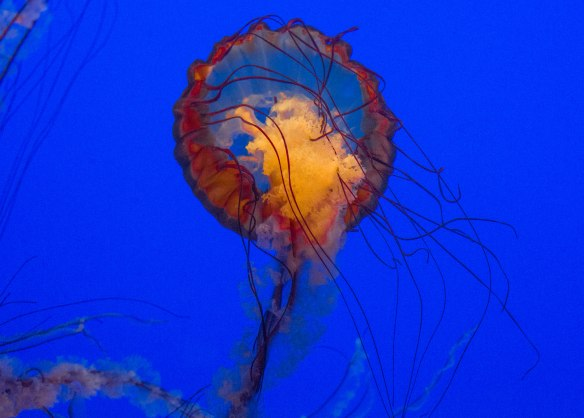jellyfish float