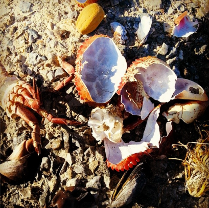 Screen Shot 2014-01-31 at 12.59.53 AM