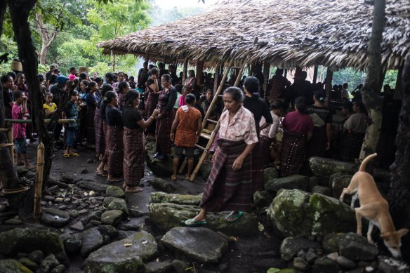 whole gang koke bale